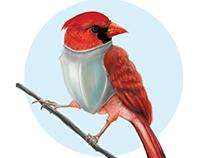 Digital art — Birds Toucan & Cardinal