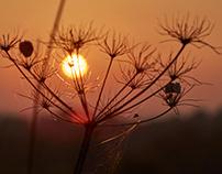 Hertfordshire Autumnal Sunset