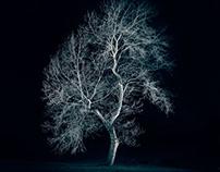Night trees I