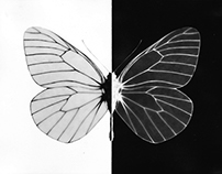 A Butterfly Encyclopaedia