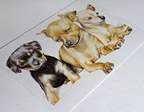 Cute little dogs / Cachorrinhos