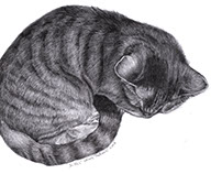 CAT DRAWINGS Original graphite pencil