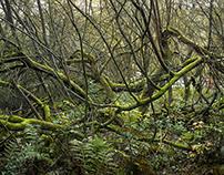 Wet Woodland #1