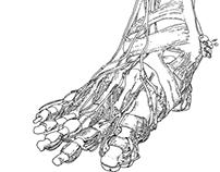 Talos body parts sketches