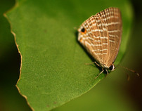 Macro Photography - Butterflies