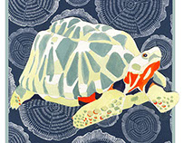 Junior Illustration: Endangered Turtle Posters