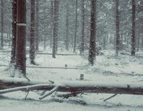 Fiby Urskog Vinter