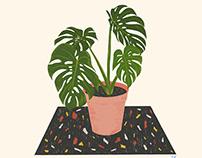 houseplants | Ilustration