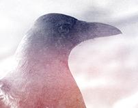 Ice Crow