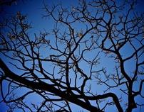 3 Tree Tri