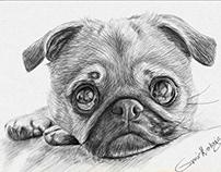 Pet portrait sketches
