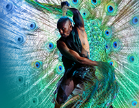Artwork - Peacock