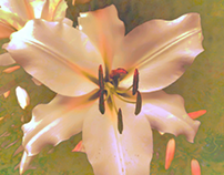 Mother of pearl lilies