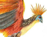 Hoatzin - Amazonas bird