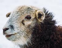 I Love Ewe Snow