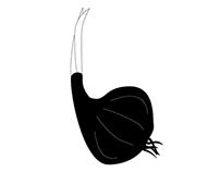 Onion Alphabet