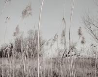 Sumpfland II