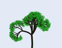 Maritime pine