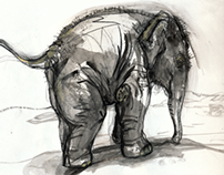 Zoo Drawings Elephants