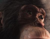 Chimpanzze