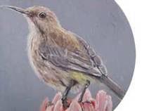 Bird series. 2012