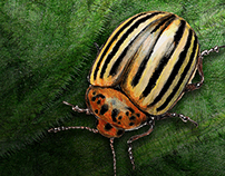 Bonnie Plants Pest Illustrations