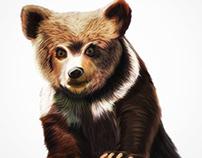 Illustration: Grizzly Bear Cub /ˈɡrizlē/•/ber/•/kəb/