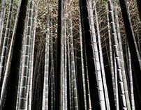 Fotografia | Bamboo