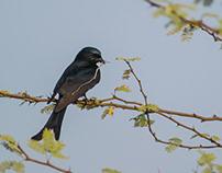 Bird Photography and Videography at Bhigwan