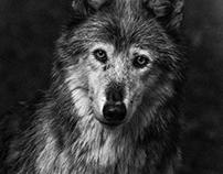 I love wolves ...