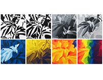 Botanical Gouache Series