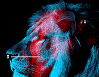 Lion Man of Judah.
