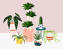 Buying Plants Online