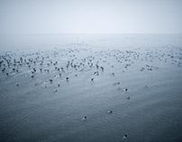 White lake - Balaton