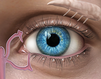 Lacrimal Gland Medical Illustration