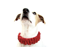 Crowded knots dog collar