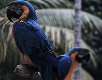 Quistococha Zoo