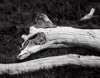 Wooden Creatures