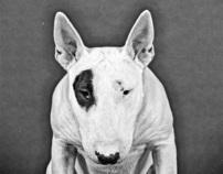 Diezel the Bull Terrier