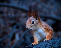 Squirrel-Photo