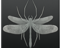 Spiderfly Icon