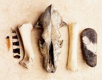 bones & feather