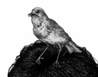 A Girl and a Bird