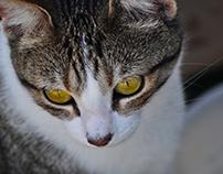 A cat named Jade