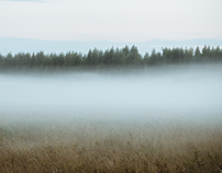 Misty field/Misty forest
