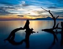 Selected Landscapes - pt. I