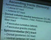 L4 Spinal Cord Overview Tracts Part 2 -Dr Sanjoy Sanyal