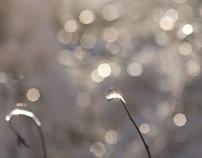 Ice by Lelyana Markina