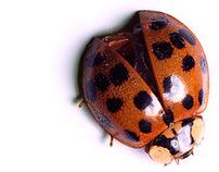 Xavier Nuez exploratory images dead bugs