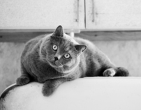 Cat thing )